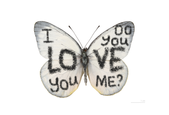 Butterfly with text written in its wings: 'I love you / do you love me'